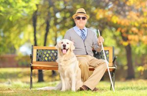 Blind man on bench with his service dog